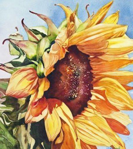 Famous Sunflower Paintings Watercolor Sunflower Sunflower Art