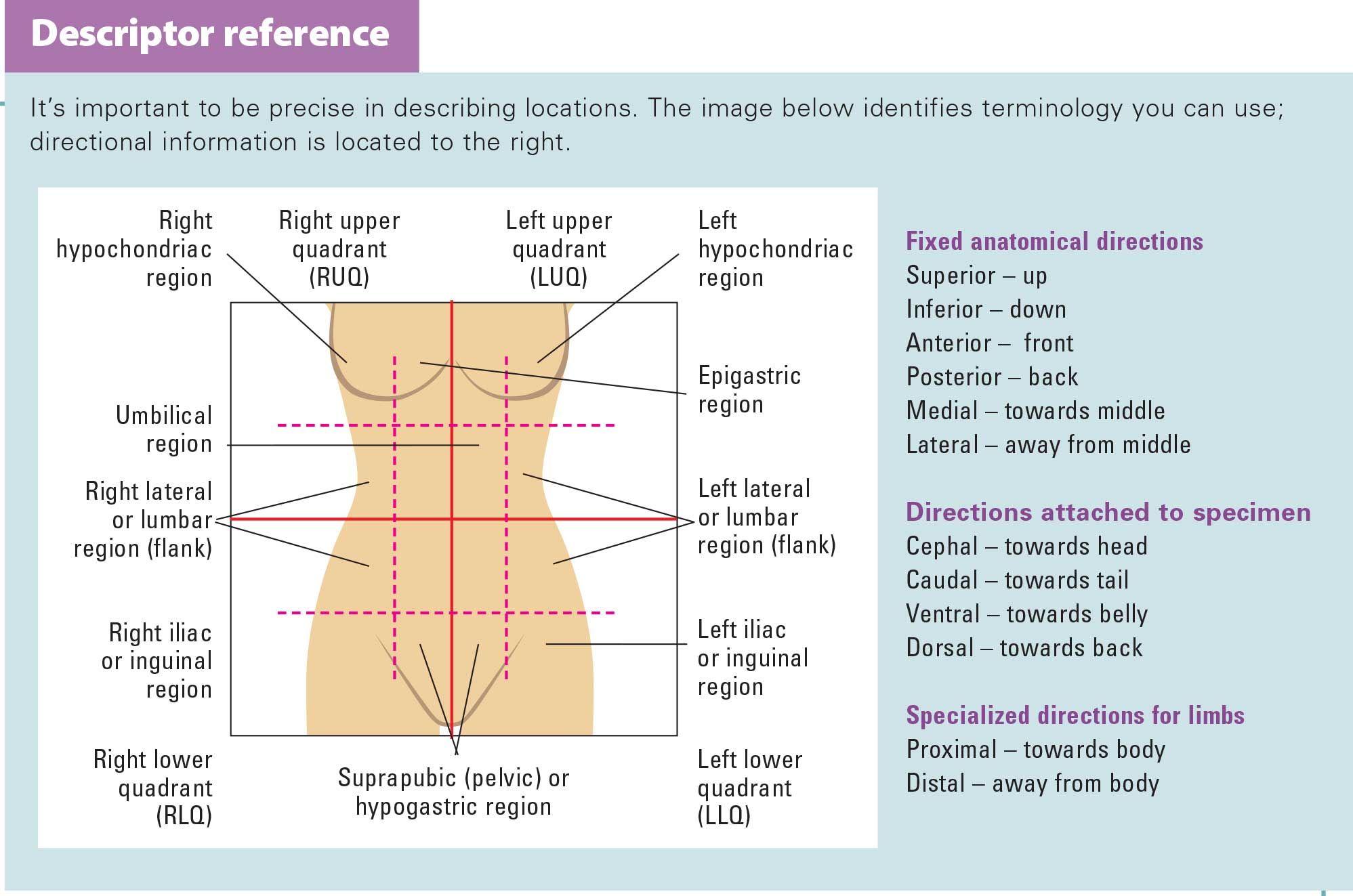 Pressure Ulcer Location Diagram Body Injury Diagram
