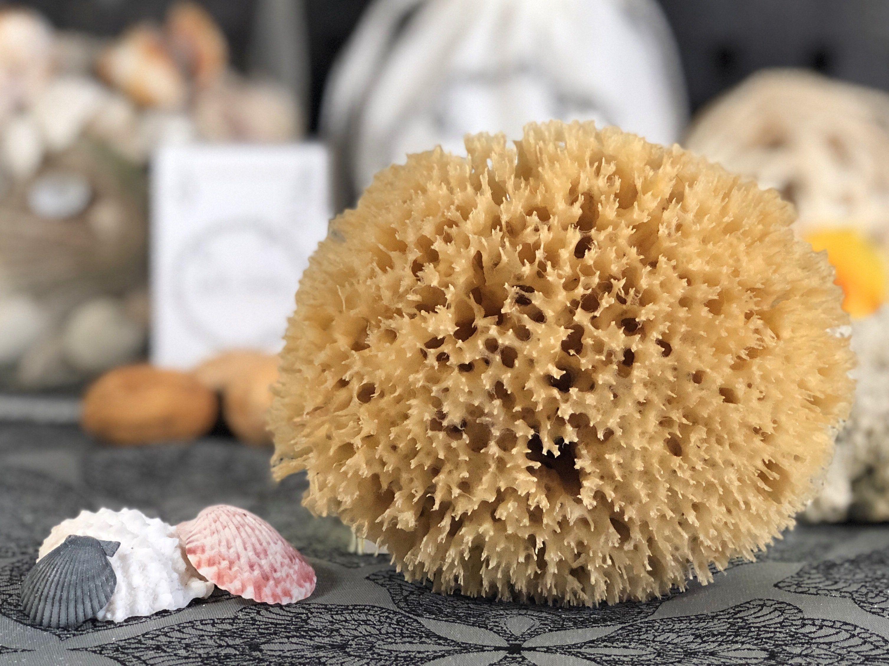 TWO Organic Baby Bath Sea Sponge - Honeycomb   Products