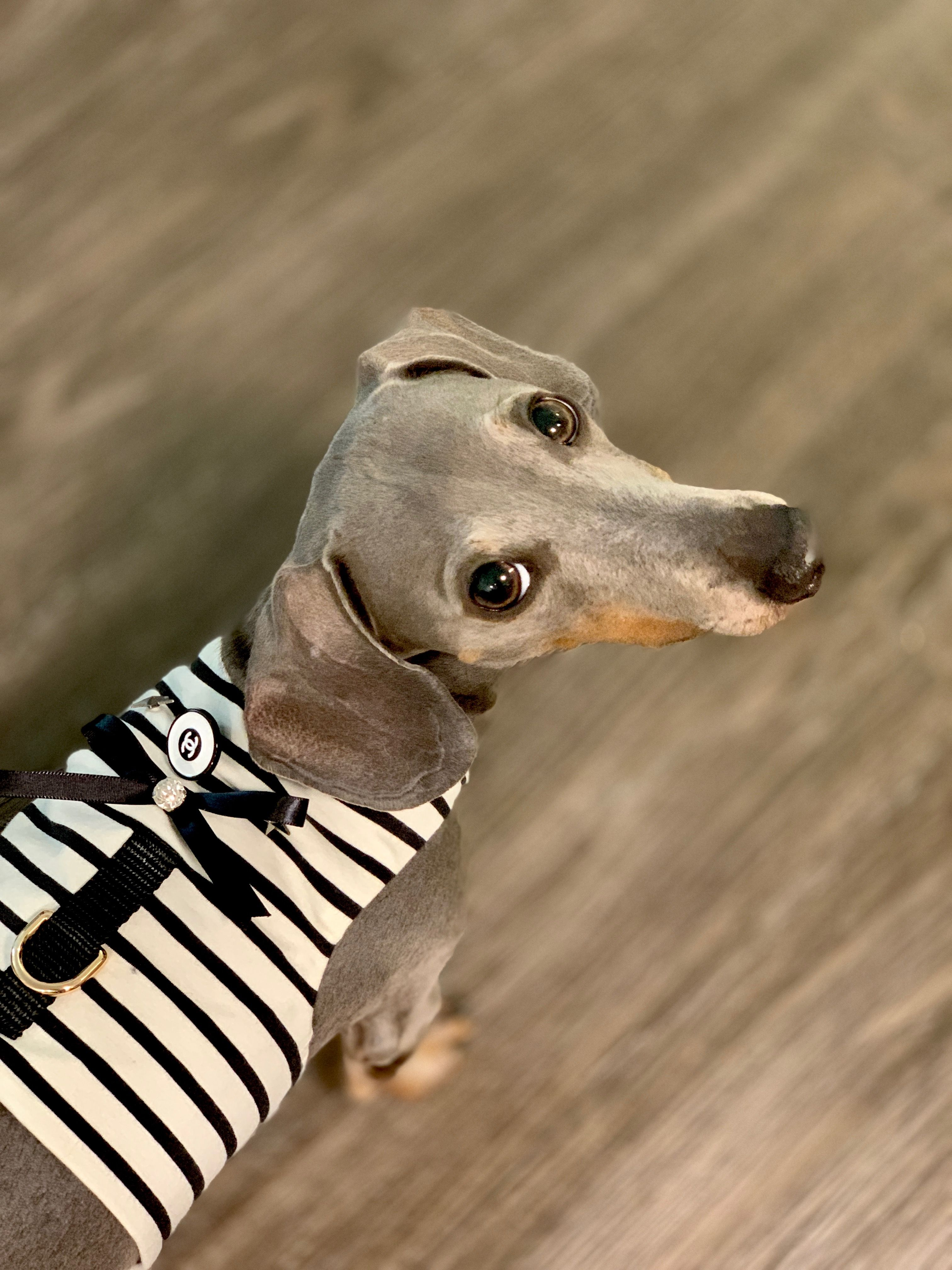 Authentic cc button dog harness designer dog harness