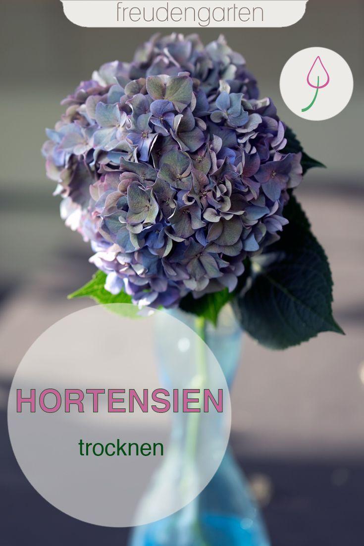 Hortensien Trocknen Hortensien Trocknen Hortensien Und