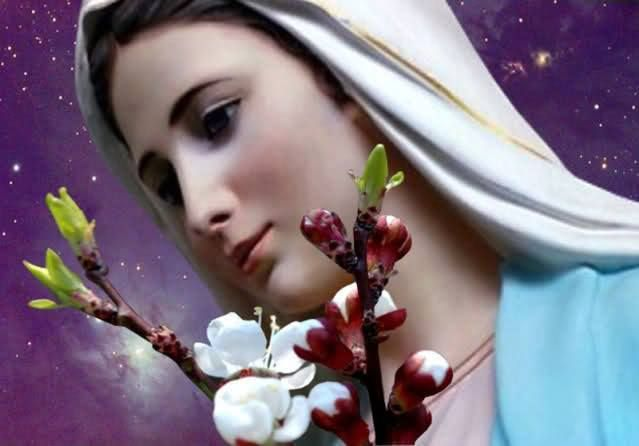 Blessed Virgin our Mother Mary Immaculate  March 21 ·     ·  Hail Mary
