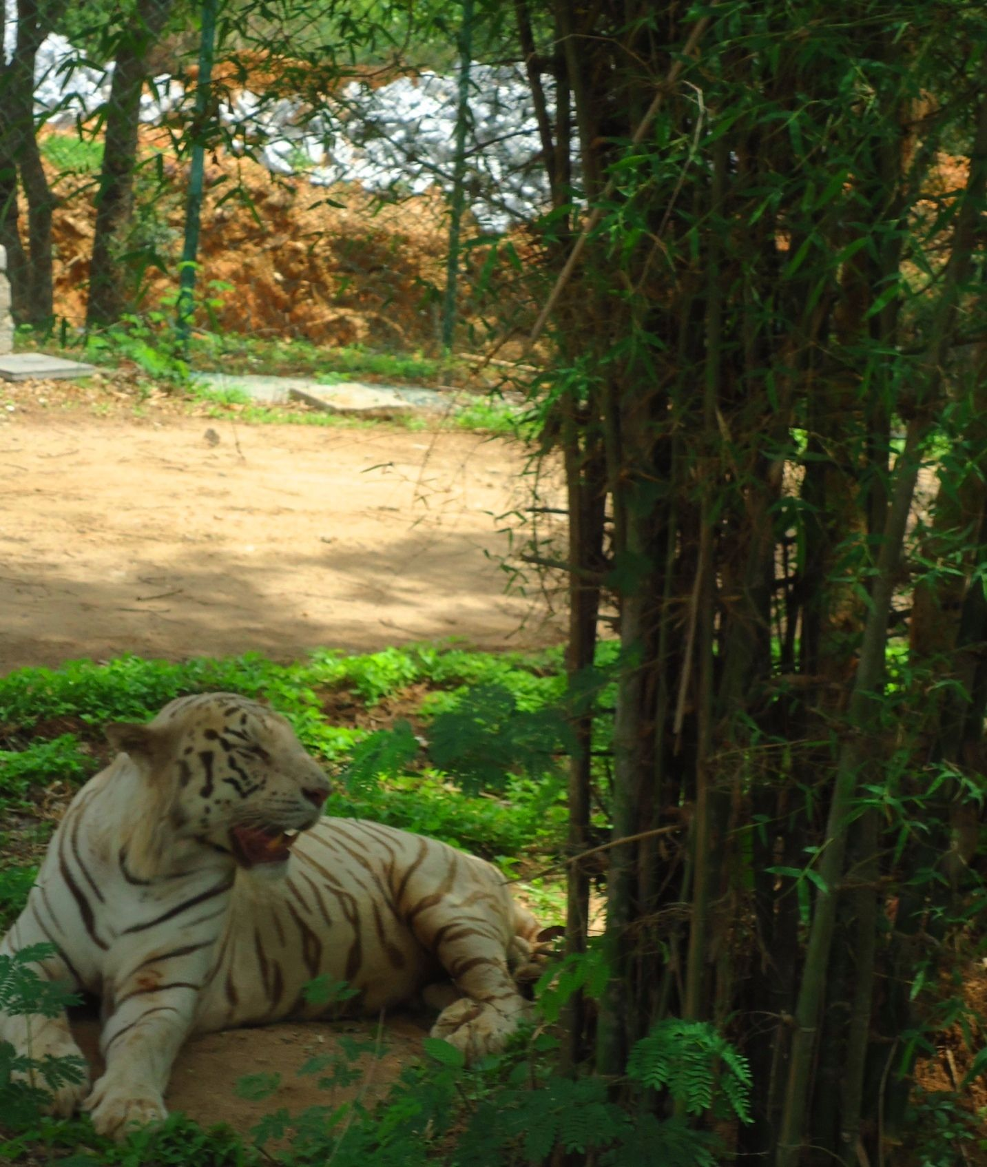 Bannerghatta National Park in Bangalore National parks