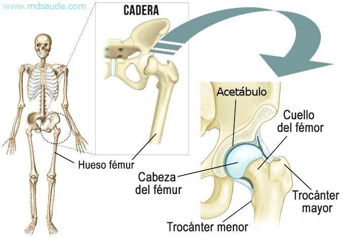 Anatomia de la cadera y del cuello femoral | mauryy | Pinterest ...