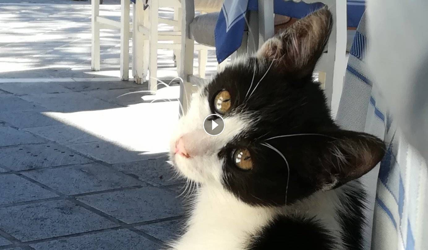 Cats Acting Funny Or Weird Cute Kitten Trend Videos