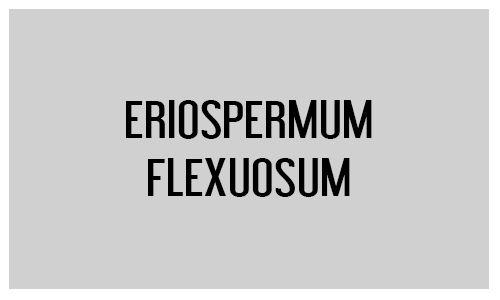 Eriospermum flexuosum