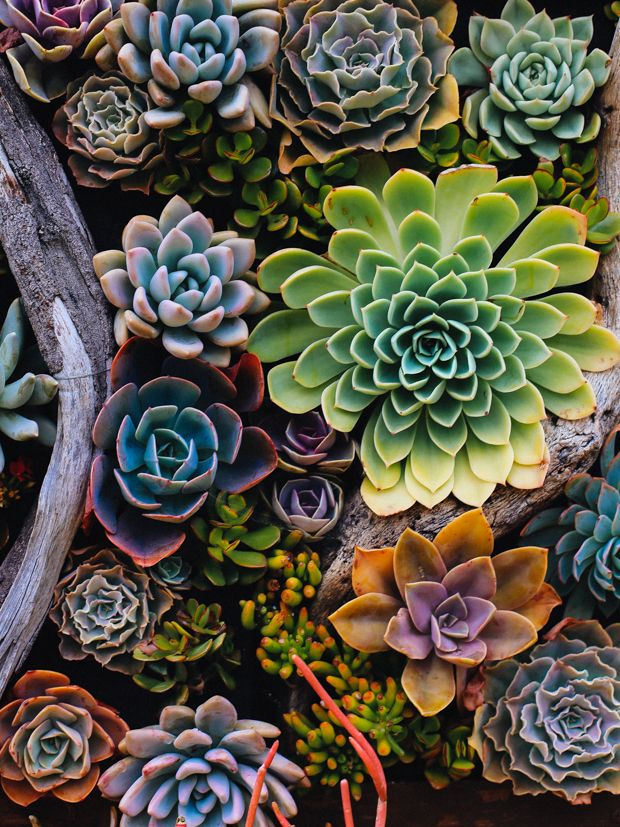 Botanical Garden Beauty With Images Succulents Succulents