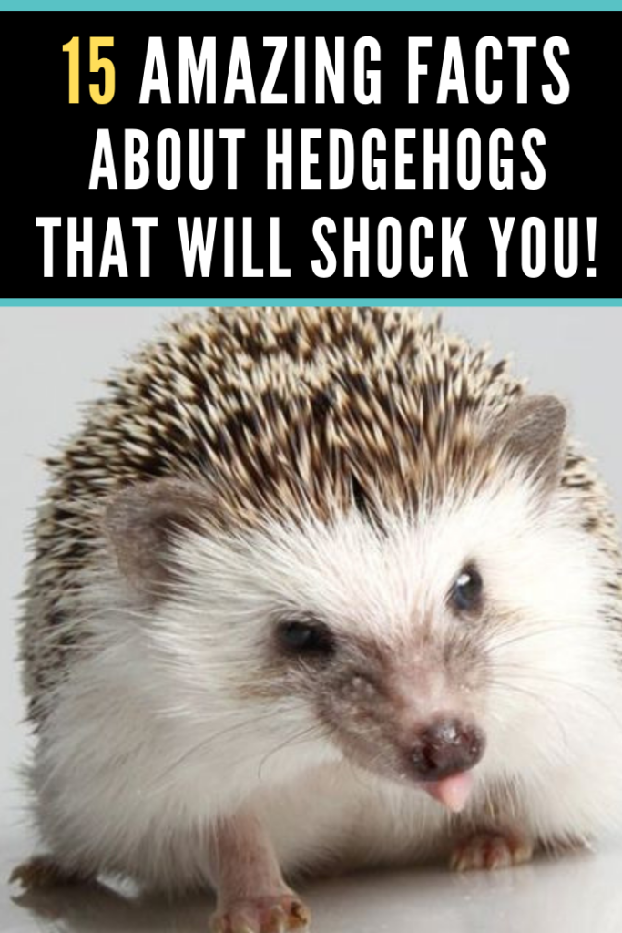 We All Love These Gorgeous And Cute Spiky Mammals But How Much Do You Know About Them Here Are 15 Amazing Facts About He Hedgehog Facts Hedgehog Pet Hedgehog