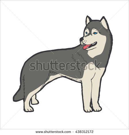 Husky Dog Breed Outline With Color Background Vector Illustration