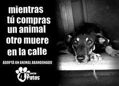 El Blog de la Loles Independiente 2: ¡¡Sacad perros y gatos de los refugios!!