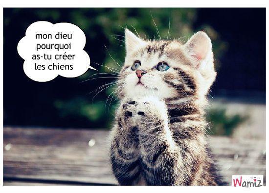 Le temple des chats - Page 2 017064a7768af9435327dd979a81786e