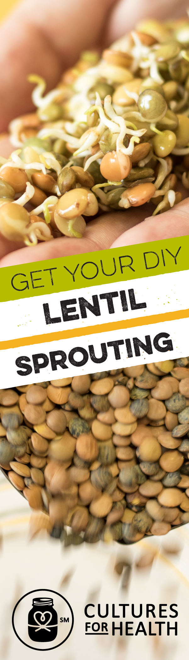 Straightforward And Fun This Kit Arrives Filled With All You Need To Successfully Begin Sprouting Lentils Are Per How To Sprout Lentils Green Lentils Lentils
