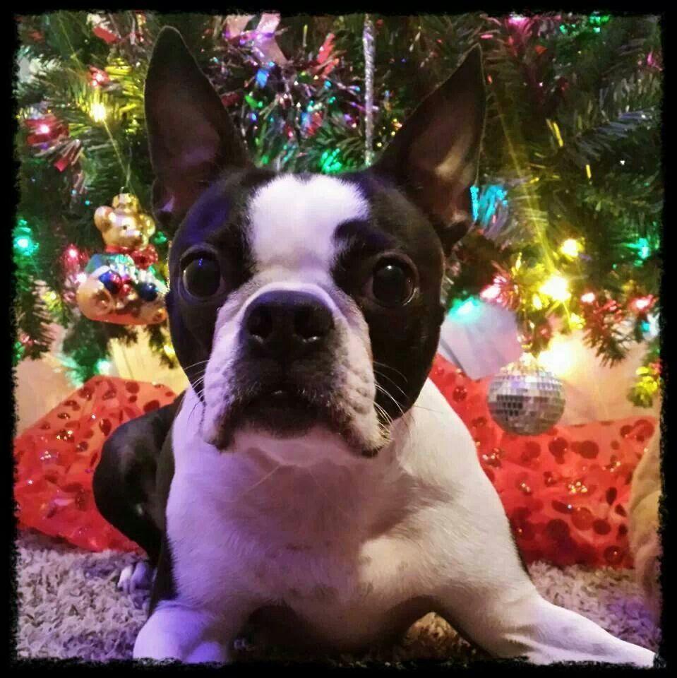 My grandog- Sookie