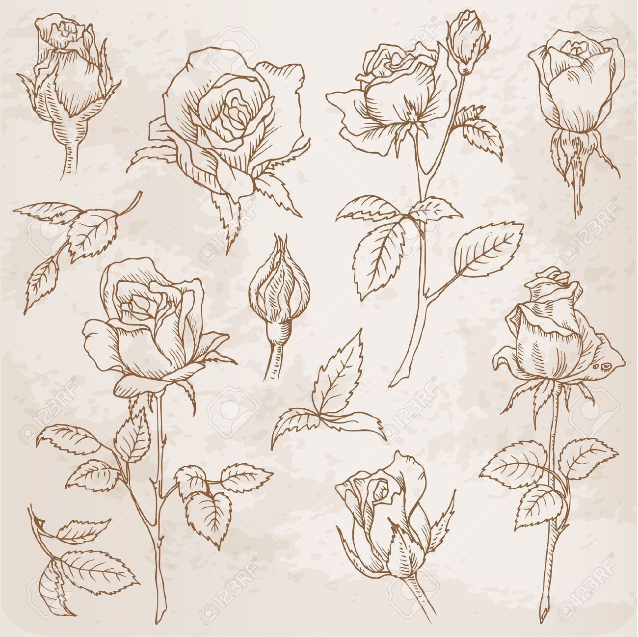 Flower Set Detailed Hand Drawn Roses In Vector Roses Drawing How To Draw Hands Flower Drawing