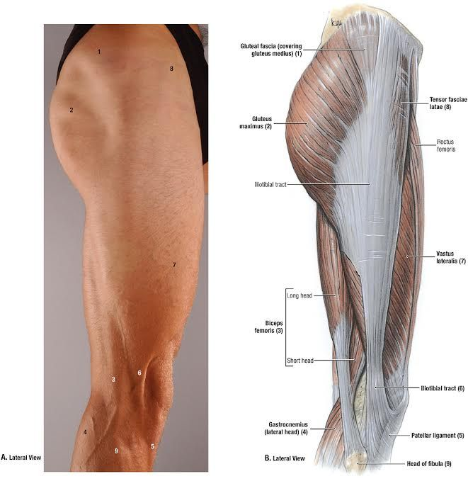 Duke Anatomy - Lab 2 Pre-Lab Exercise   anatomía   Pinterest ...