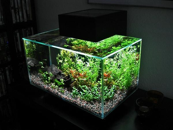 Fluval edge blog with lots of planted edge tanks home for Fluval edge fish tank