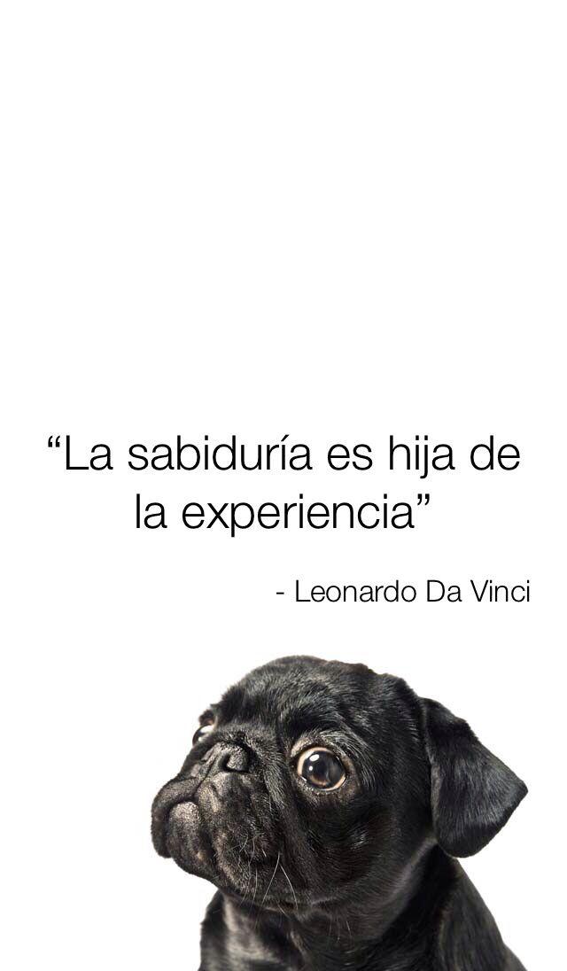 #LeonardoDaVinci #Frases