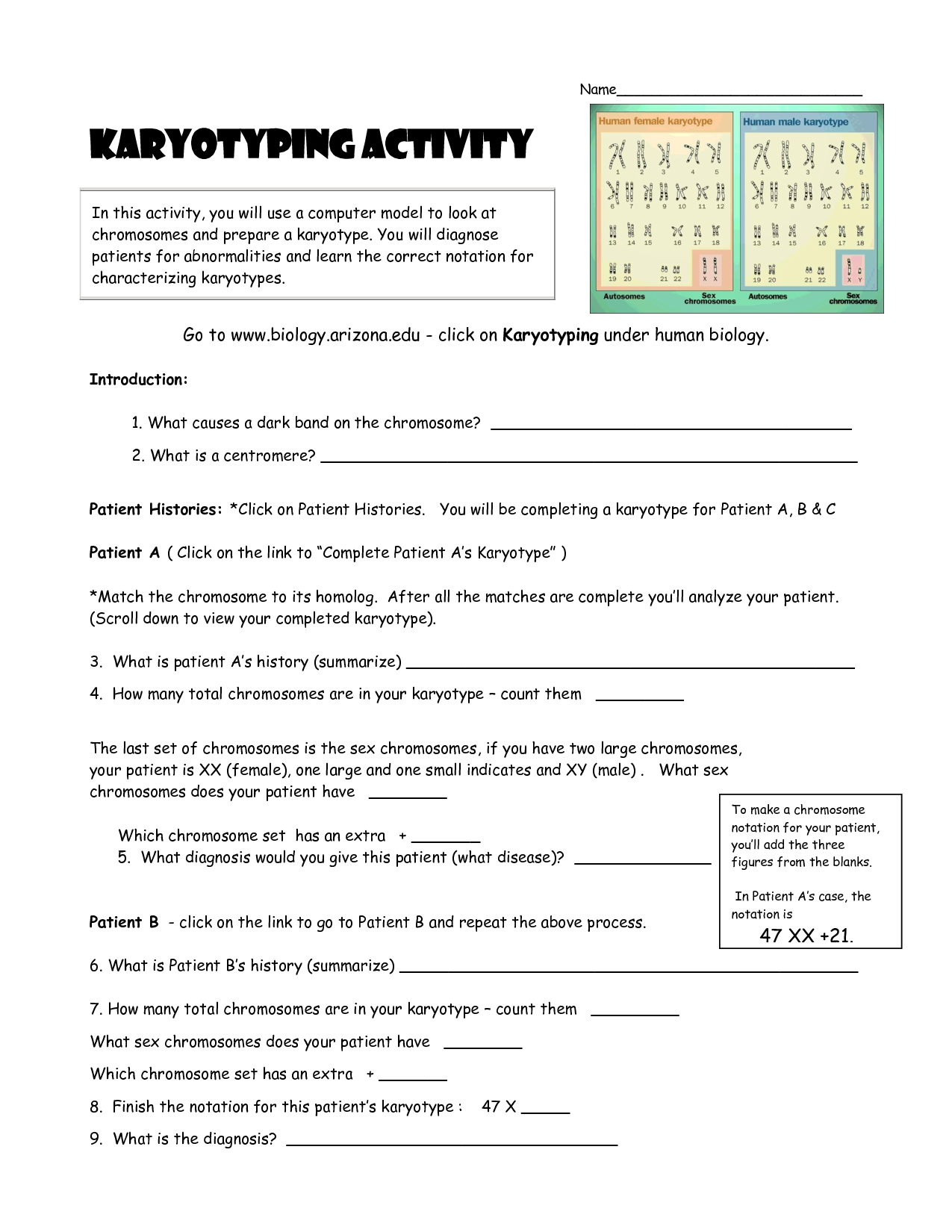 Karyotyping Activity Doc Teaching Stuff Teaching