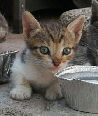 Gattini In Regalo Roma