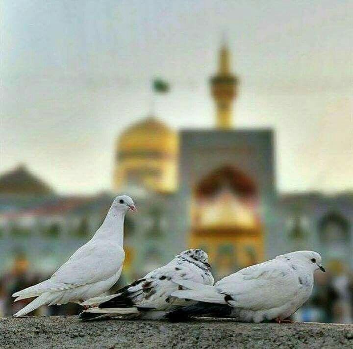 Mashhad Iran Hazrat Imam Hussain Hussain Karbala Islamic Girl
