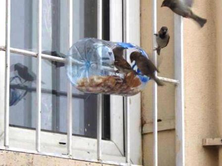 Alimentando Passarinhos Comederos Para Aves Comederos Para Pájaros Comedero De Pájaros