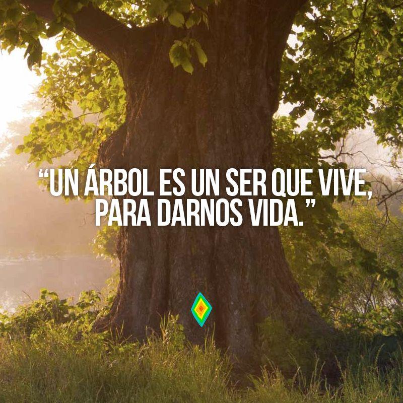 Un árbol Es Un Ser Que Vive Para Darnos Vida Frases De