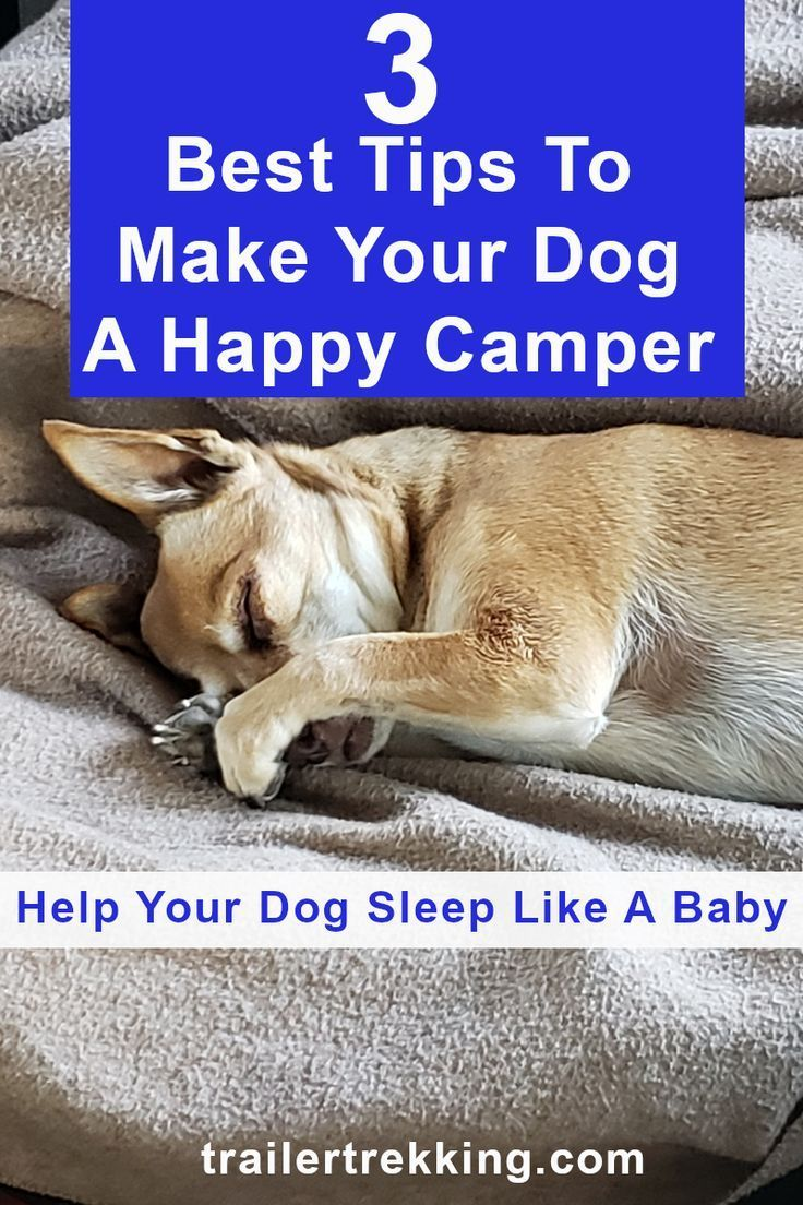 Best places for a dogs bed in an rv in 2020 sleeping