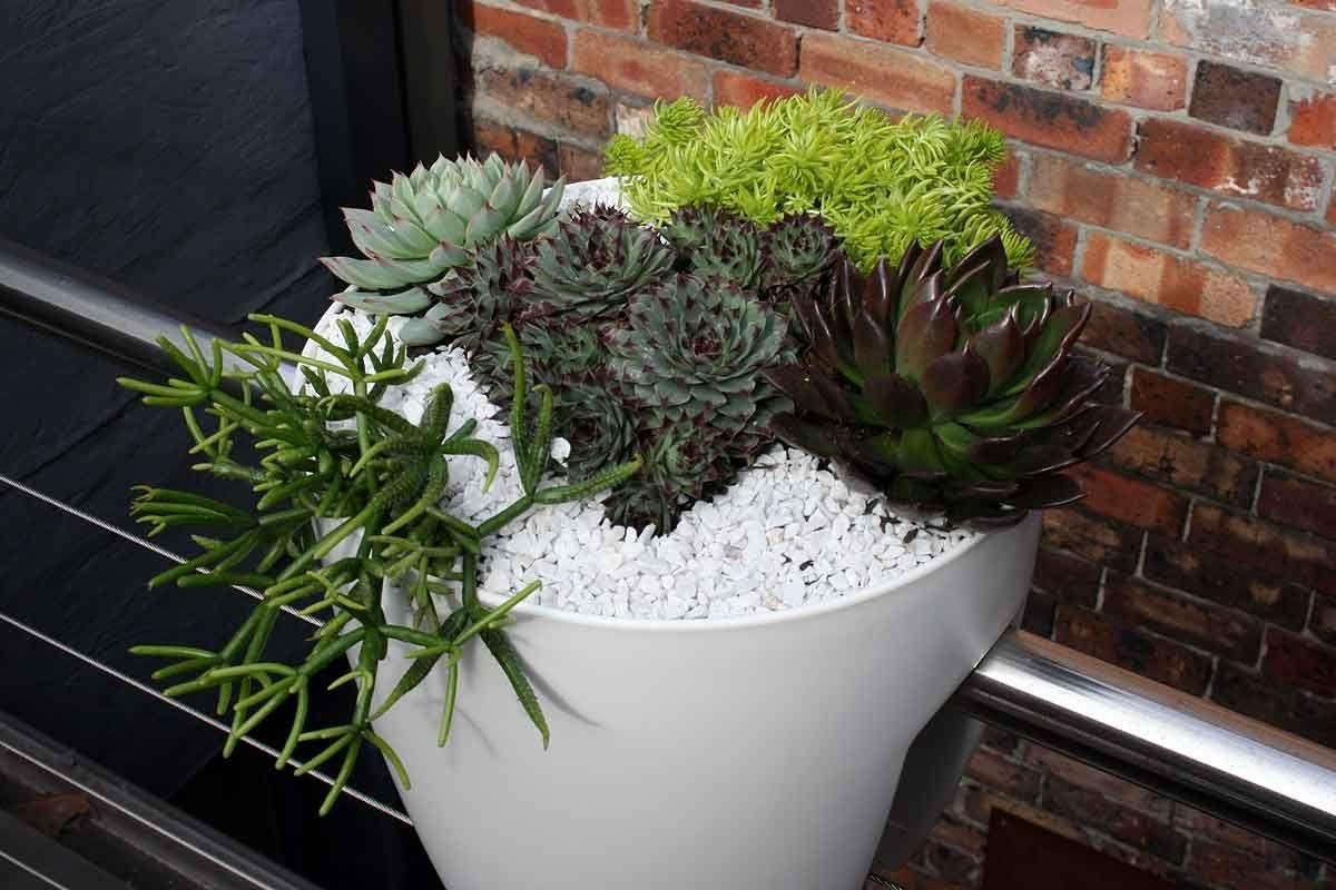 A succulent garden in a railing planter makes good use of space