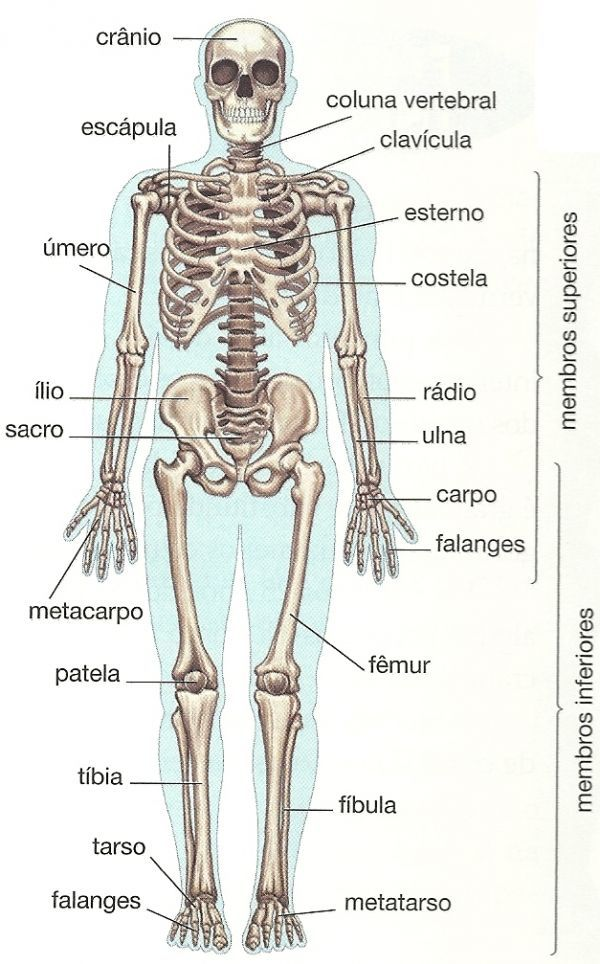 corpo humano ossos - Pesquisa do Google | educação | Pinterest ...
