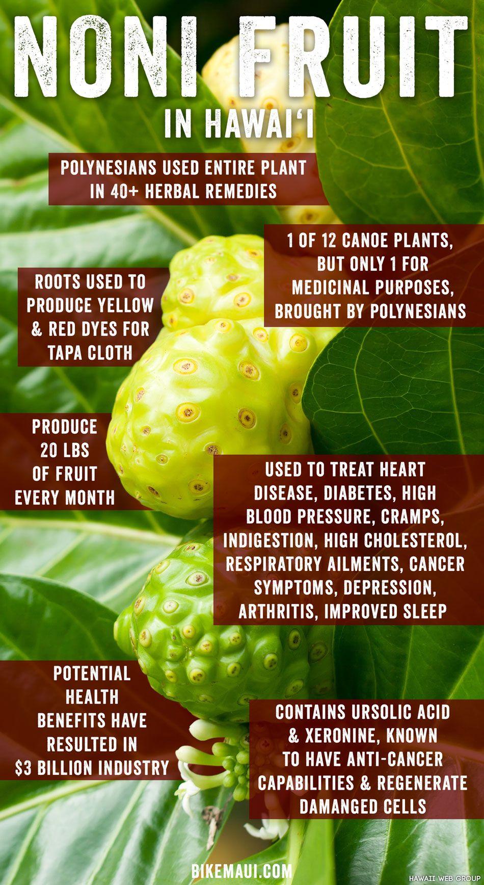 the remarkable, medicinal noni fruit | noni fruit, noni