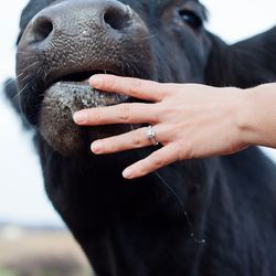 Who doesn't love an engagement session that takes place on a farm...with cows!