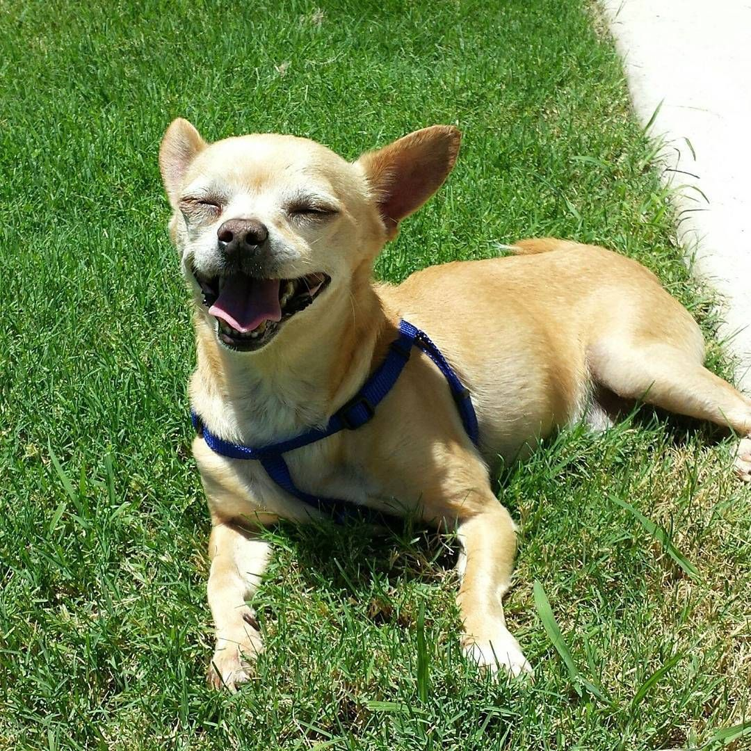 Dallas Pets Alive posts both adoptable pets (in case you
