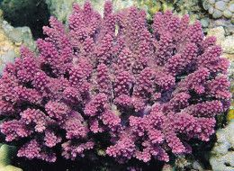 20 New Species Of Coral Listed As Threatened @HuffPo #coral #ocean