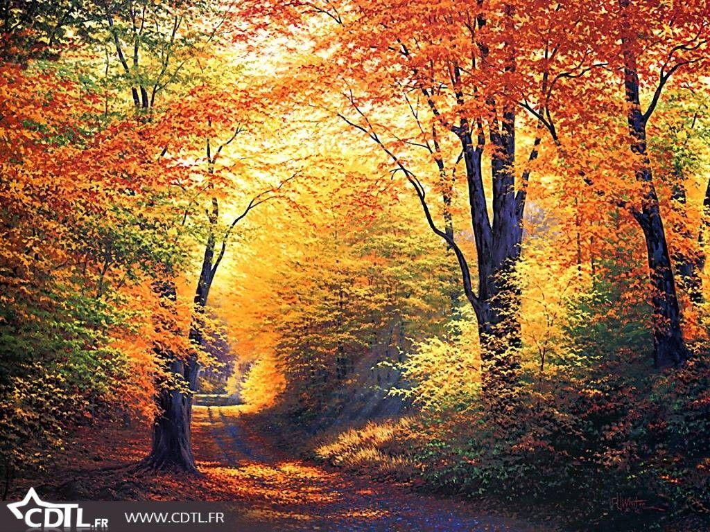 Automne Les Sous Bois De Toutes Les Couleurs Paysage Automne Images Paysages Paysage