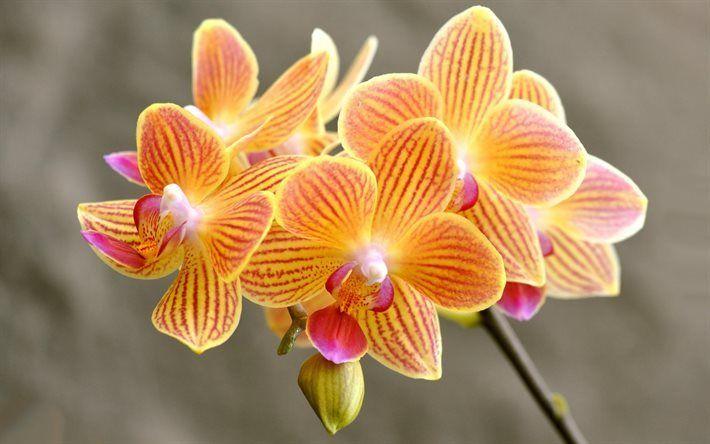 foto de Télécharger fonds d'écran orchidées, orange orchidées, de belles ...