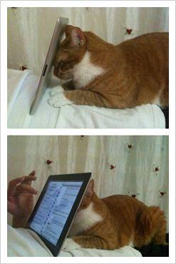 블루밍의 놀라운이야기 :: 고양이 꼬리잡기 그리고 대박 웃긴 고양이들.