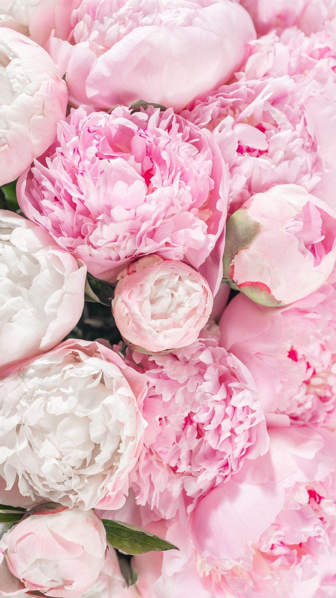 Peonies Wallpaper Pink Flowers Wallpaper Flower Iphone Wallpaper Peony Wallpaper