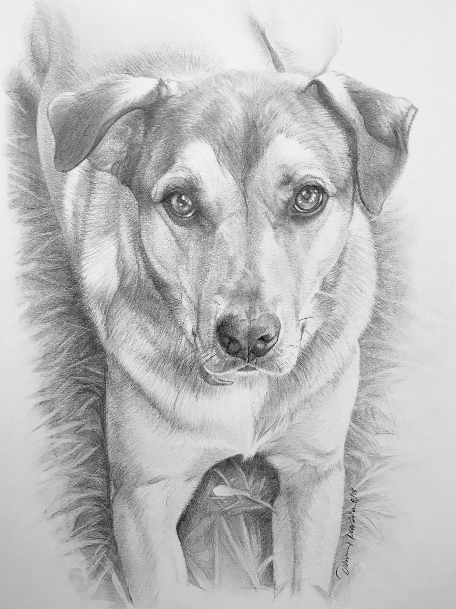 Portrait of a dog   Dog pencil drawing, Dog paintings, Dog portraits