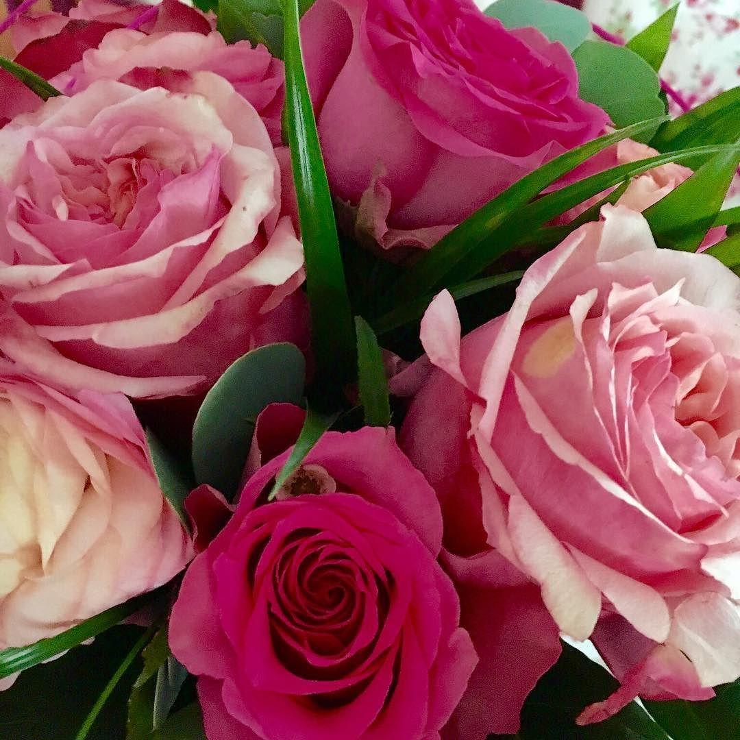 keine rosen ohne dornen keine rosen rosenliebe ohne. Black Bedroom Furniture Sets. Home Design Ideas