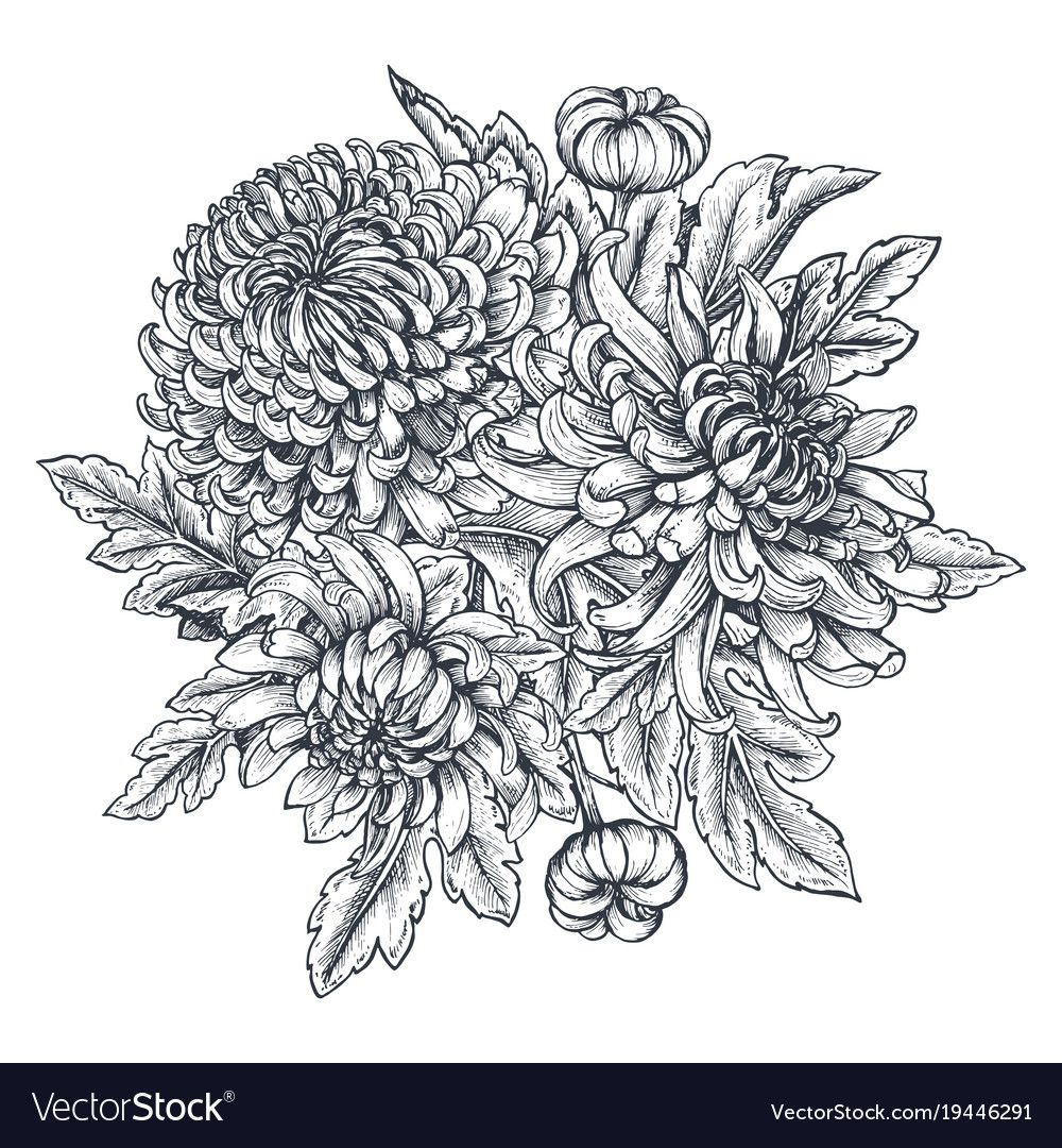 Bouquet With Hand Drawn Chrysanthemum Vector Image On Vectorstock Flower Drawing Flower Line Drawings Chrysanthemum Drawing