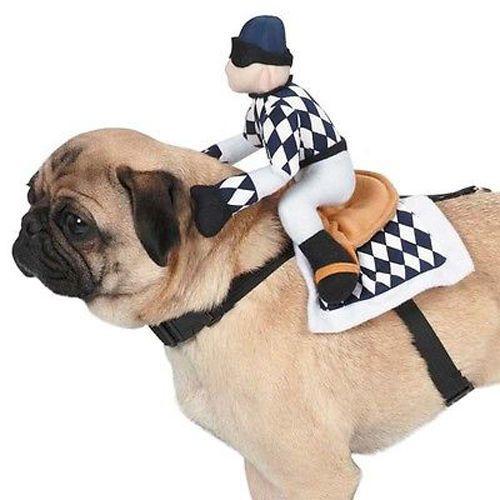 Dog Halloween Costume Harness Show Jockey Pet Dog Harness Zack