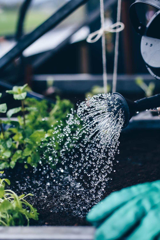 Hochbeet Tipps Anlegen Bepflanzen Und Leckeres Gemuse Ernten Hochbeet Hochbeet Anlegen Terrasse