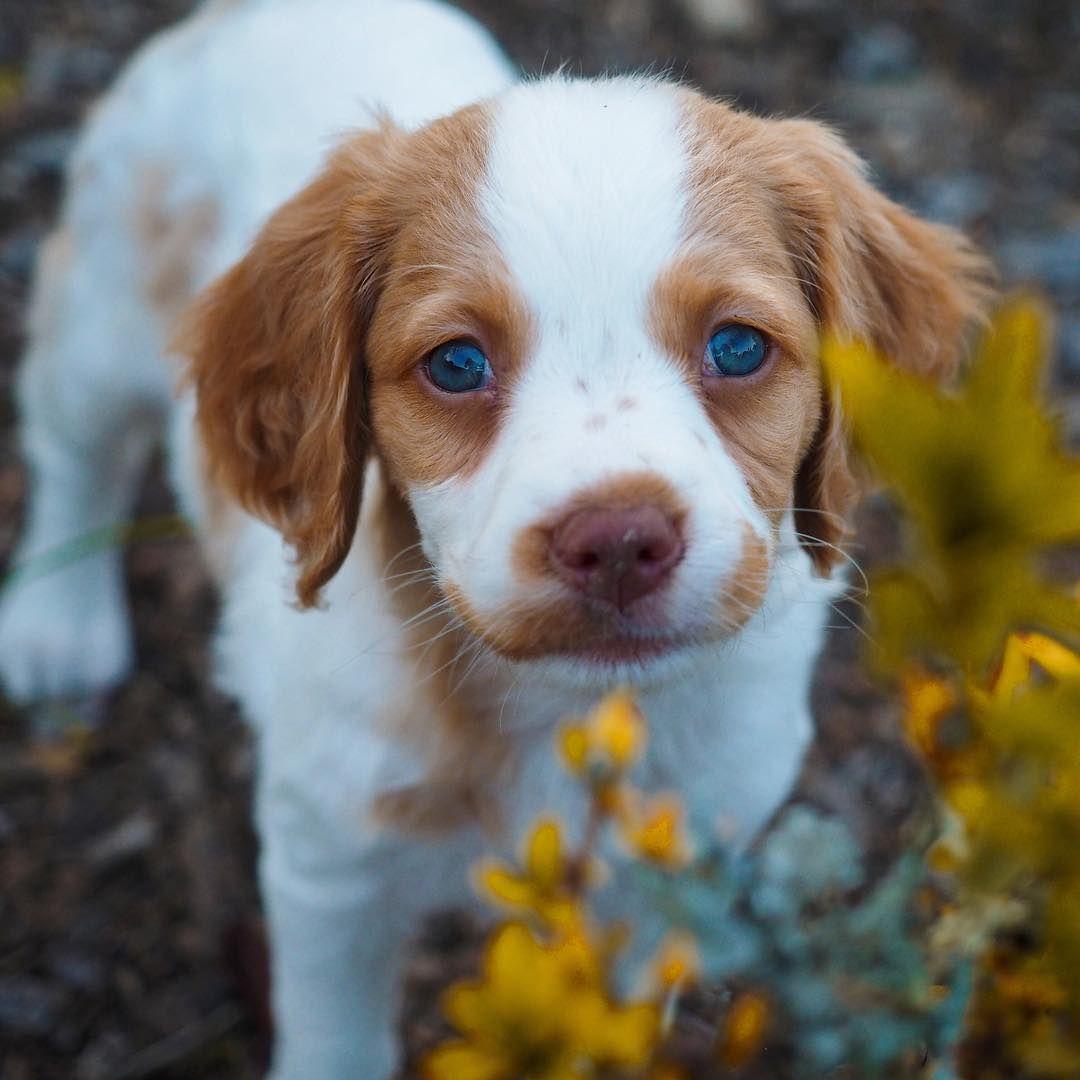 House training keeperedogobediencegirlpuppies