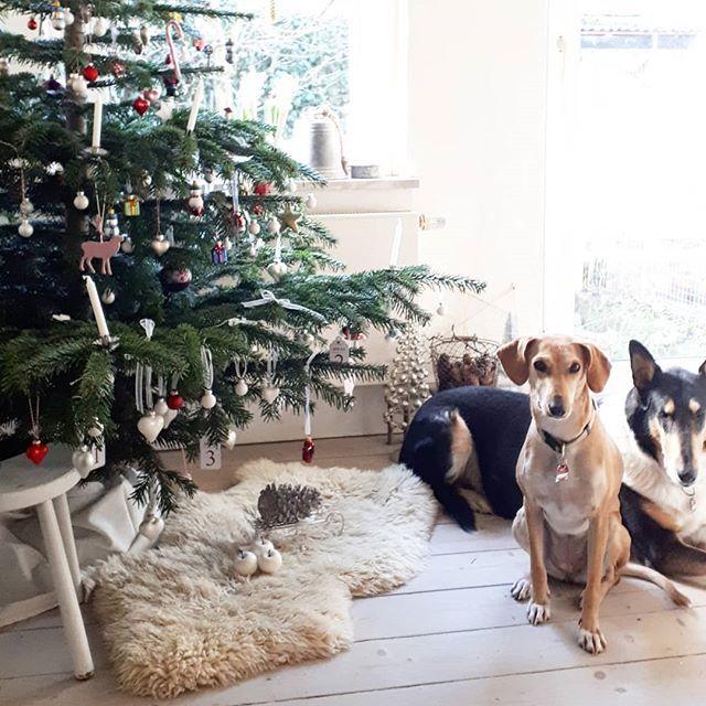 Ich wünsche Euch ein schönes Weihnachtsfest ! 🎄😘.I wish you a merry christmas ! 🎄😘.#merrychristmas #froheweihnachten #christmasiscoming #christmas #weihnacht #eweihnachten #instachristmas #instachristmastree #christmastree🎄 #weihnachtsbaum