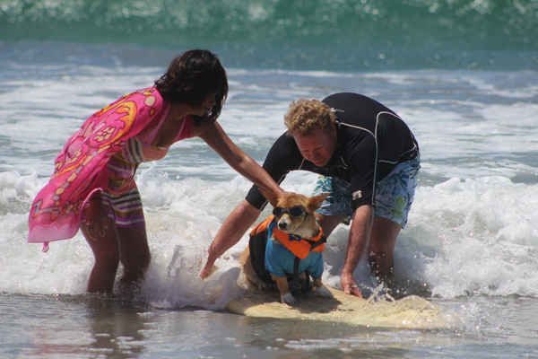 This Corgi had a hard time convincing his mom it was okay to let go. He totally had this under control.