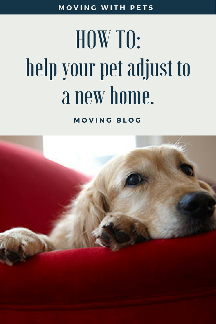 Pin By Steph H On New Home In 2020 Moving Tips Pets Dog Help