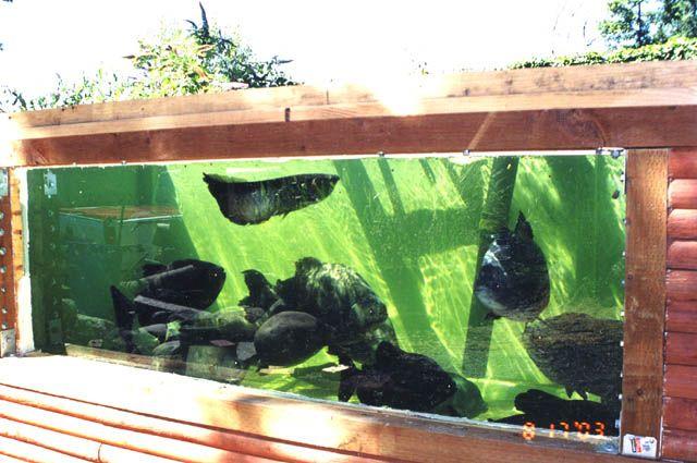 Amazing outdoor aquarium suitable to warmer climates if for Outdoor aquarium uk