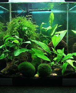 Nano aquarium ou mini aquarium aquariophilie for Mini poisson aquarium