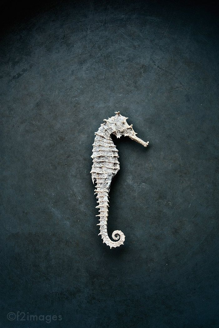 Seahorse (photo: f2images)