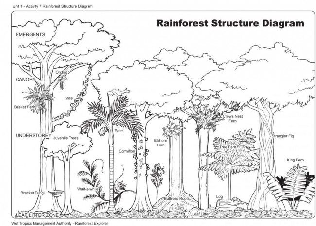 Rainforest structure diagram